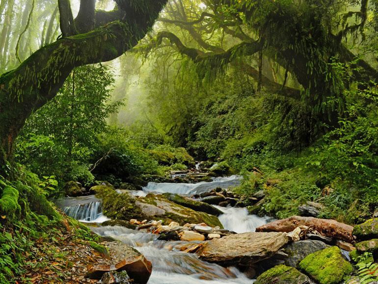Natur pur in Kolumbien. (Bild: Pink Cloud)